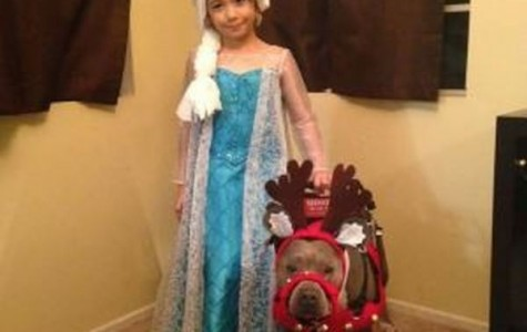 Pit bulls: The epitome of EVIL????