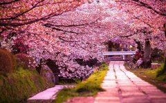 Blossom into Spring with Japanese Festivals