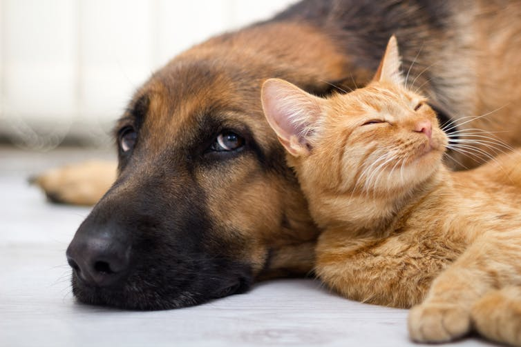 When To Let Pets Go